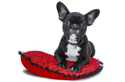 Comparar y calcular precios y ofertas de Seguros de Animales de Compañía y Mascotas baratos online